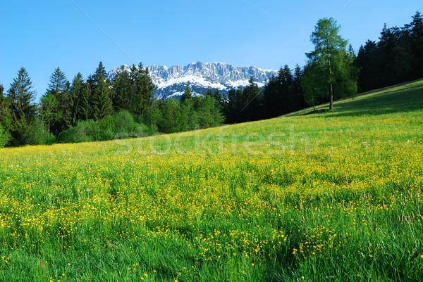 Stok fotoğraf: Dağlar · alpler · Avusturya · çiçek · kar · kaya