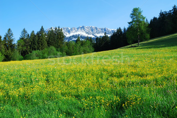Foto stock: Montanhas · alpes · Áustria · flor · neve · rocha