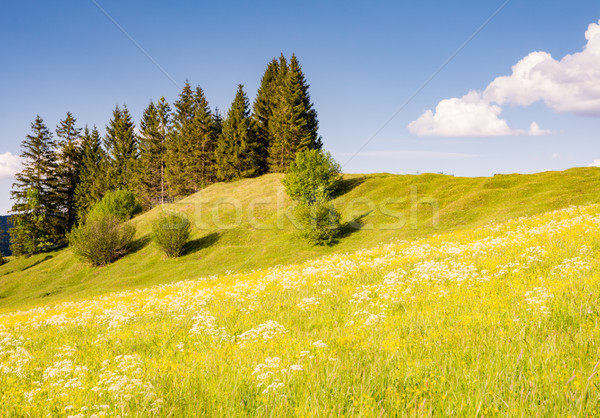 Flower meadow in the alps Stock photo © manfredxy