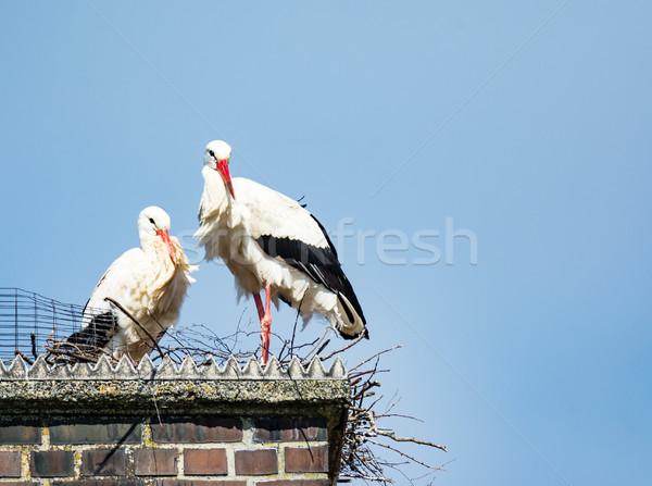 Biały bocian para gniazdo komin budynku Zdjęcia stock © manfredxy