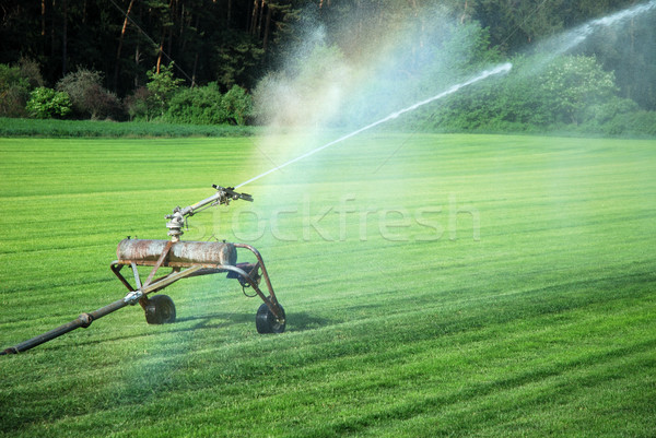 Watering grass Stock photo © manfredxy