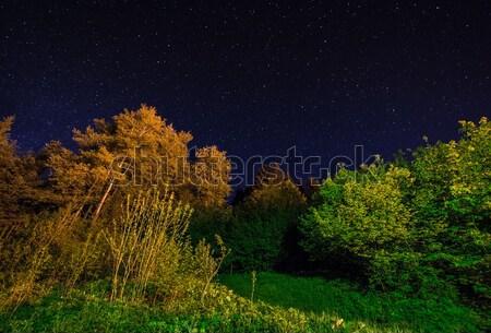 木 夜空 星 風景 ストックフォト © manfredxy