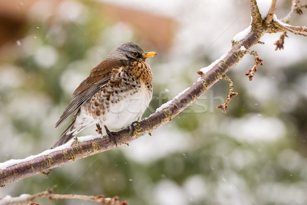 Pássaro sessão árvore natureza jardim Foto stock © manfredxy
