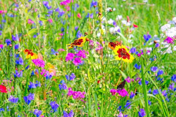 Background of a summer meadow with wildflowers Stock photo © manfredxy
