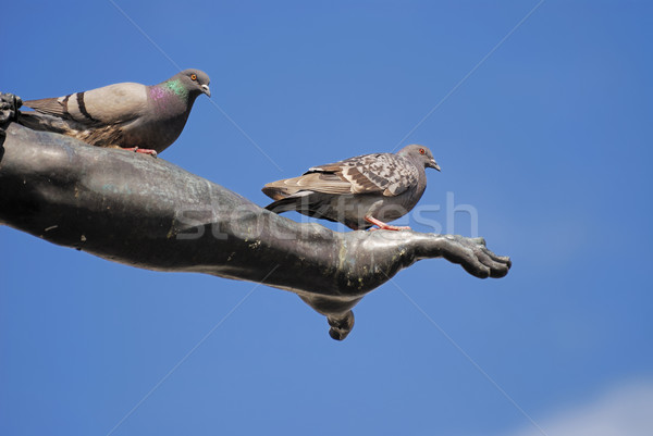 Pigeon on the arm Stock photo © manfredxy