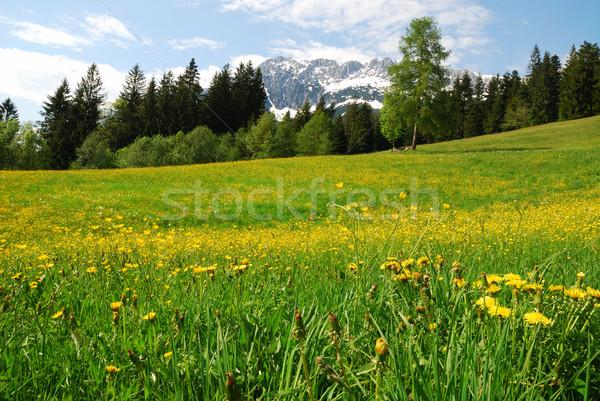 Stok fotoğraf: Dağlar · alpler · Avusturya · çiçekler · bahar · ahşap