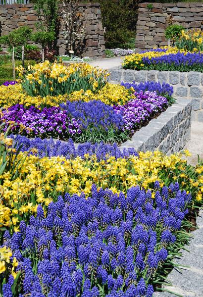 Kwiat ogród niebieski żółte kwiaty kwiaty dziedzinie piękna Zdjęcia stock © manfredxy