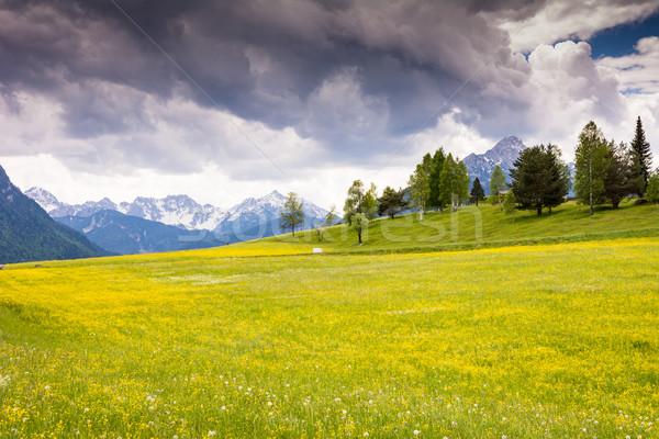 Alpy góry trawy górskich Zdjęcia stock © manfredxy