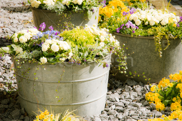 Vintage estanho flores da primavera jardim retro planta Foto stock © manfredxy