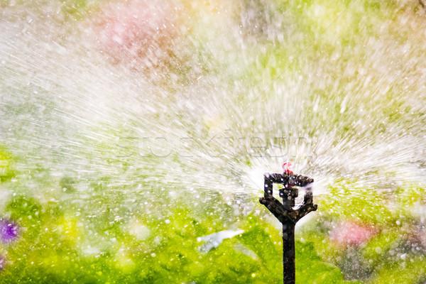 Ogród nawadnianie automatyczny roślin wody Zdjęcia stock © manfredxy