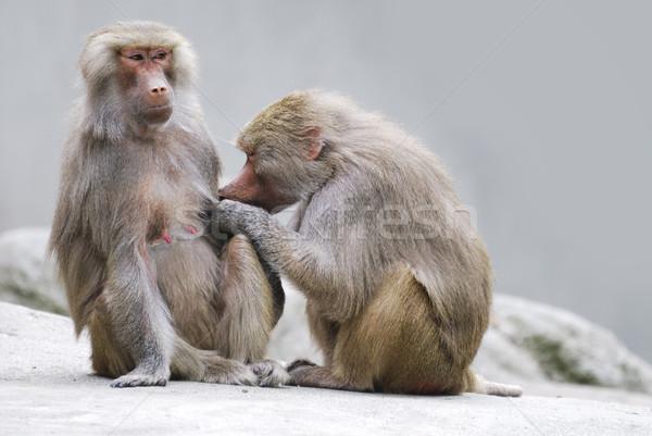 два занято взаимный семьи природы животного Сток-фото © manfredxy