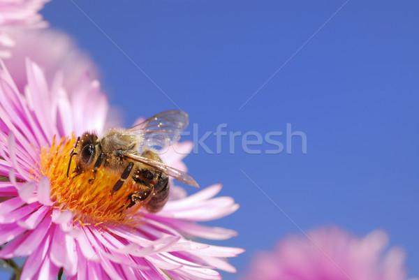 Honingbij roze hemel bloem natuur bee Stockfoto © manfredxy