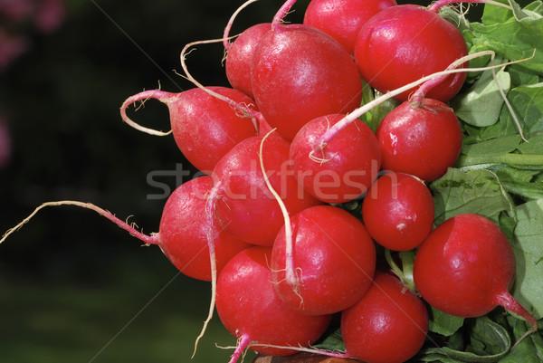 Bos radijs vers Rood blad tuin Stockfoto © manfredxy
