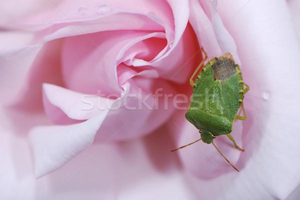 Bicho rosa verde flor flor Foto stock © manfredxy