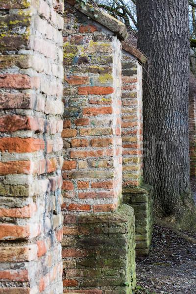Szczegół historyczny miasta ściany drzewo budynku Zdjęcia stock © manfredxy
