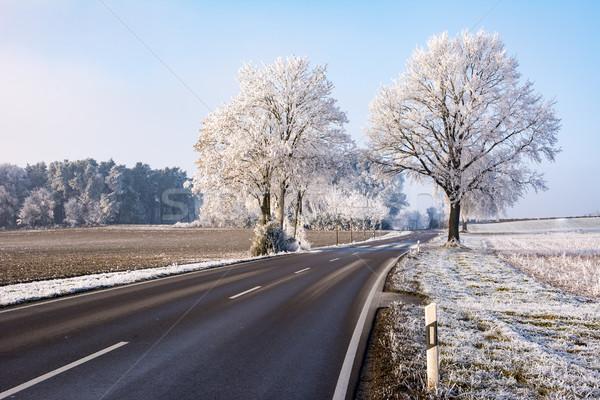 Vidéki út tél tájkép fák út természet Stock fotó © manfredxy