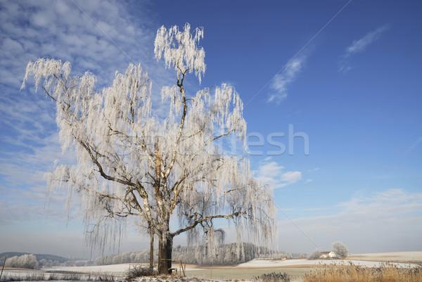 Winter landscape Stock photo © manfredxy