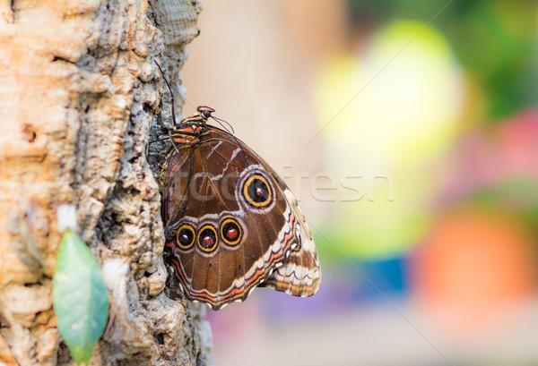 熱帯 蝶 座って 木の幹 マクロ ストックフォト © manfredxy