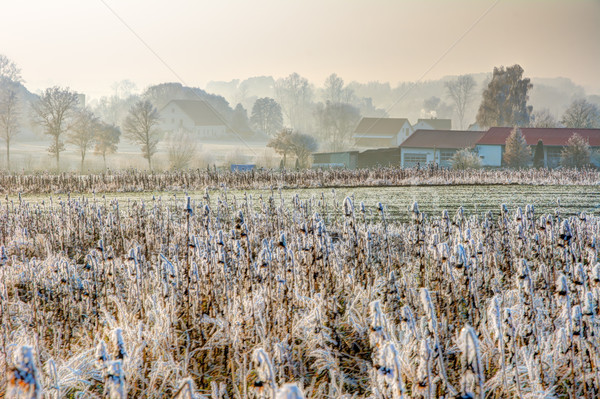 Frosted field at a village in Bavaria Stock photo © manfredxy