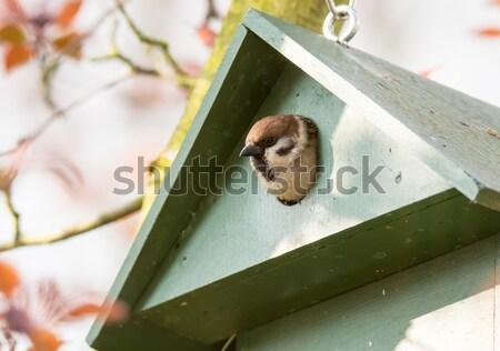Drzewo wróbel zielone Zdjęcia stock © manfredxy