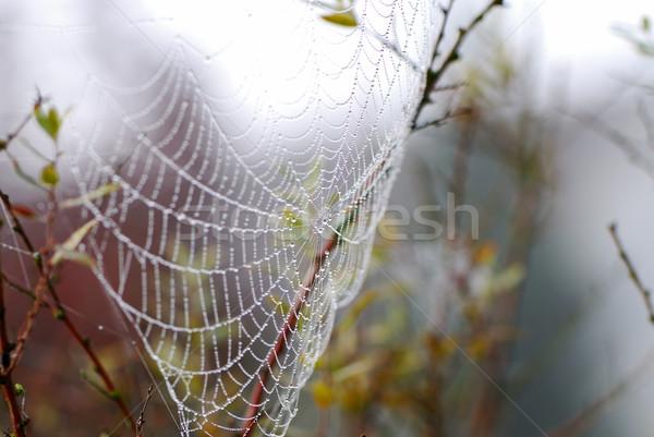 Cobweb Stock photo © manfredxy