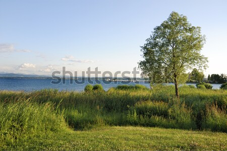 See Himmel Baum blau Europa Wiese Stock foto © manfredxy