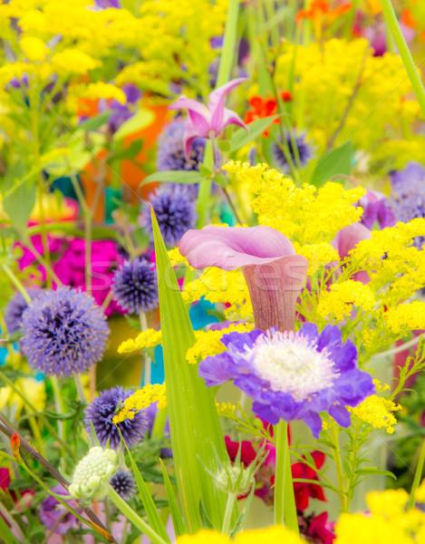 Virágágy különböző nyári virágok szelektív fókusz kert citromsárga Stock fotó © manfredxy