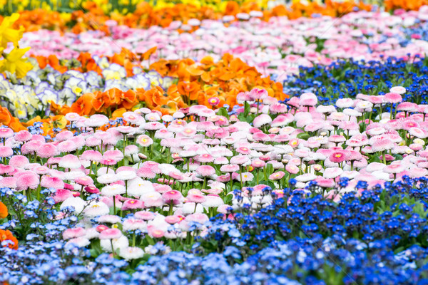 Gorgeous Flower Bed Stock photo © manfredxy