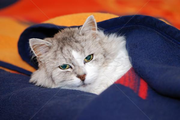 Perzische kat gezicht kat oranje ontspannen hoofd Stockfoto © manfredxy