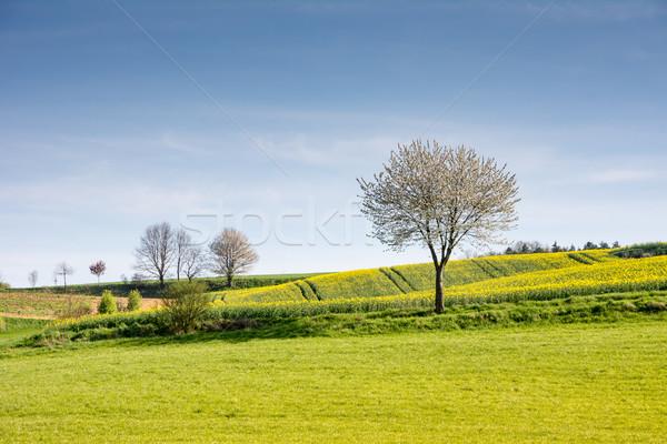 Stok fotoğraf: Manzara · çiçekli · ağaç · bahar