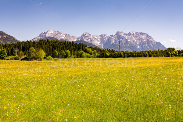 Meadow in the alps of Bavaria Stock photo © manfredxy
