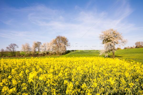 Landschap bloei boom voorjaar bloemen veld Stockfoto © manfredxy