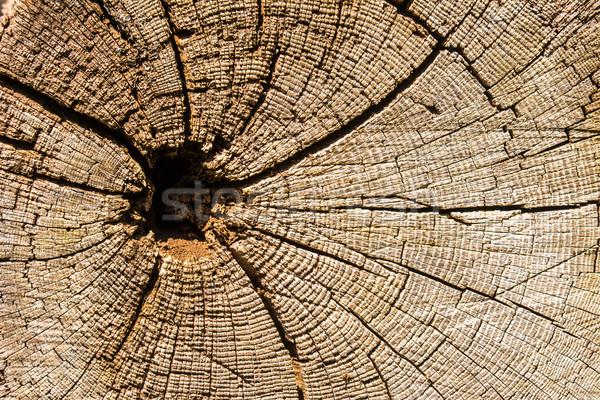 Drzewo pierścienie wyblakły Zdjęcia stock © manfredxy