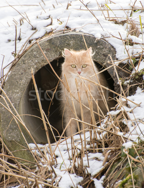 Chat séance fuite pipe cacher hiver Photo stock © manfredxy