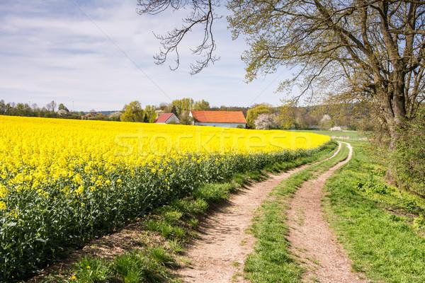Camino rural granja violación campo paisaje Foto stock © manfredxy