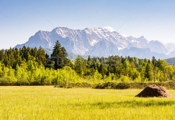 Photo stock: Prairie · alpes · montagnes · bois · forêt · nature