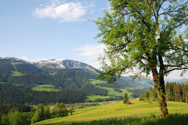 Austrian Alps Stock photo © manfredxy