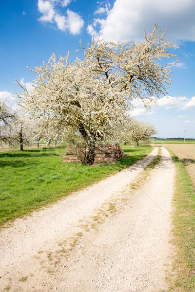 çayır çiçekli meyve ağaçlar manzara çim Stok fotoğraf © manfredxy