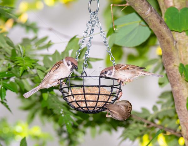 Kuş yağ top gıda tüy hayvan Stok fotoğraf © manfredxy