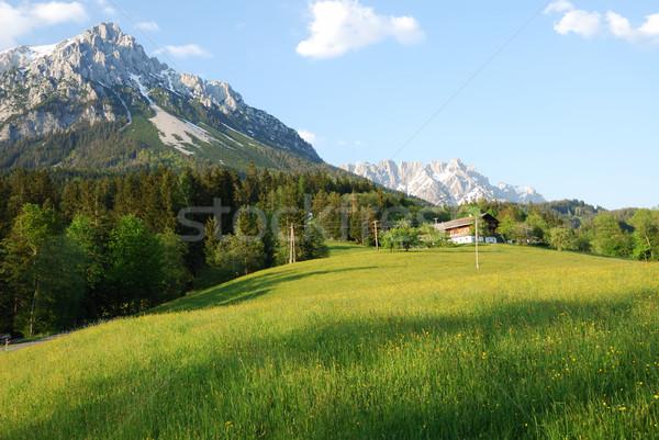 Stok fotoğraf: Dağlar · alpler · Avusturya · çiçekler · ahşap · orman