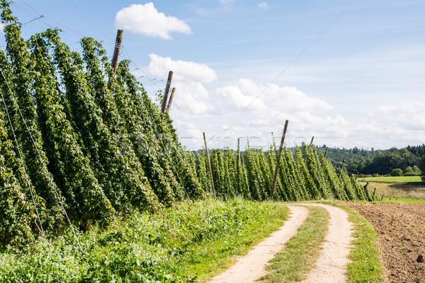 Paese corsia hop giardino strada sterrata panorama Foto d'archivio © manfredxy