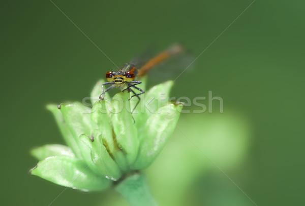 Rood vergadering blad bloem natuur macro Stockfoto © manfredxy