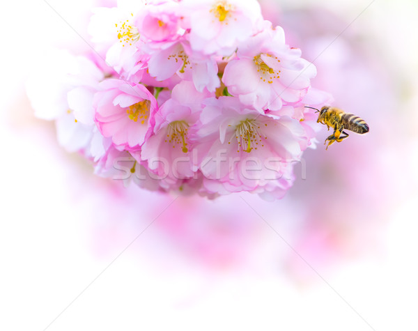 Voador abelha rosa flores primavera Foto stock © manfredxy