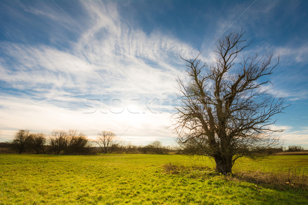 Lonely Tree in Bavaria Stock photo © manfredxy