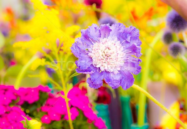 Virágágy különböző nyári virágok szelektív fókusz virágok citromsárga Stock fotó © manfredxy