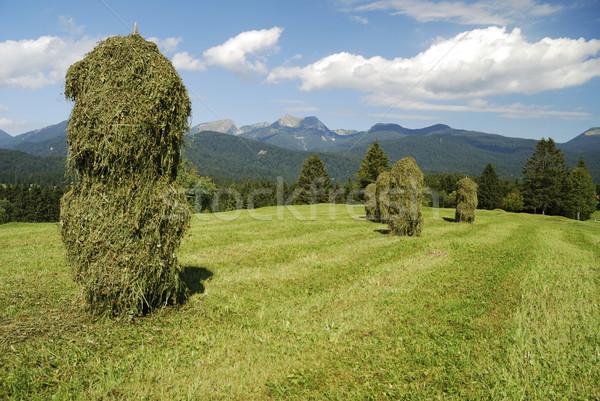 Alpes herbe paysage montagne vert prairie Photo stock © manfredxy