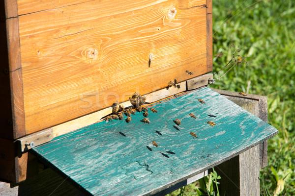Beekeeping Stock photo © manfredxy