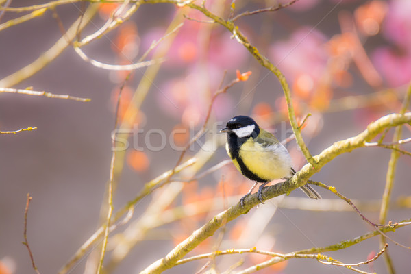 売り言葉 鳥 座って ストックフォト © manfredxy