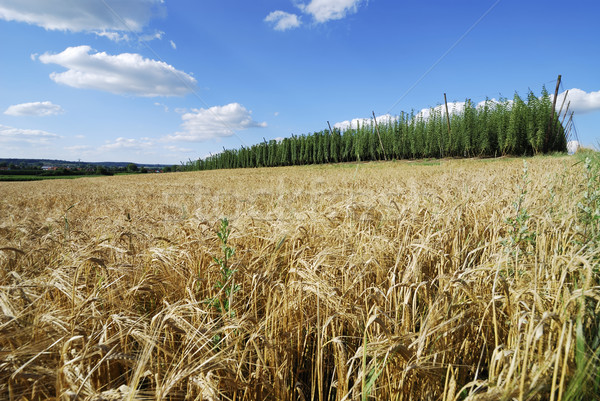 Bavarian agriculture Stock photo © manfredxy