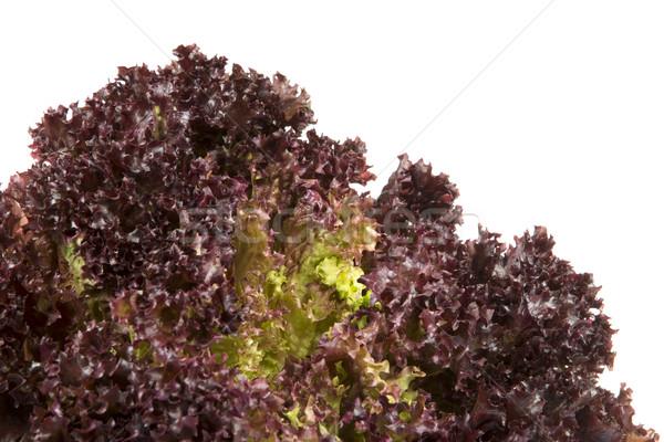 Batavia Lettuce Stock photo © manfredxy